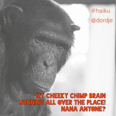 #haiku by David Scholtz (@dordje)