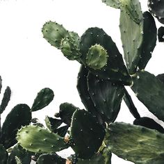 Garden Design Jardines Leave textures for stock use Cacti And Succulents, Cactus Plants, Cactus E Suculentas, Plant Aesthetic, Plants Are Friends, Gardenias, All Nature, Echeveria, Green Plants