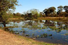 Paço da Ema, Pantanal, Mato Grosso