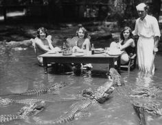 Circa 1930's. Women posing with alligators at an alligator farm.
