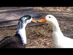 La compassione è universale - Animal Vibe