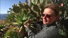 Jardin exotique de Monaco, L'extraordinaire collection de cactus