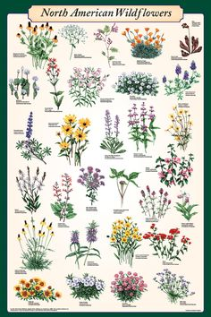 North American Wildflowers Poster - Flower Posters, Prints, Art