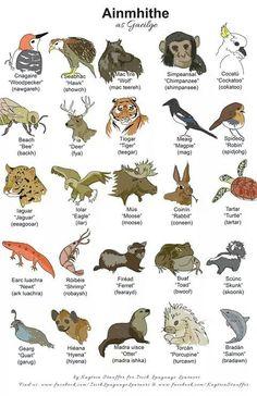 animal names in Gaeilge Scottish Gaelic, Gaelic Irish, Gaelic Words, Irish Quotes, Irish Sayings, Irish Language, Images Of Ireland, Irish People, Lyrics