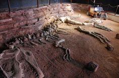 Valle de los Dinosaurios en Neuquénalle de los Dinosaurios: Apenas 84 kilómetros de la ciudad se encuentra uno de los principales sitios turísticos en Neuquén: la tierra que habitaron los dinosaurios, zona de yacimientos fósiles y hallazgos paleontológicos, donde se han encontrado los mamíferos más grandes hasta el momento. El Valle de los Dinosaurios o