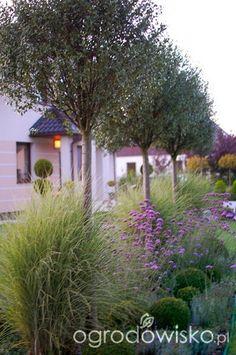 DUŻY OGRÓD małej ogrodniczki 1 - strona 703 - Forum ogrodnicze - Ogrodowisko