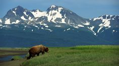 Alaska Sues Federal Agencies Over Hunting Prohibitions Develop Pictures, Alaska Tours, Predator Hunting, Alaska Adventures, Everything Cross Stitch, Cruise Excursions, Travel Advise, California Vacation, Alaska Cruise