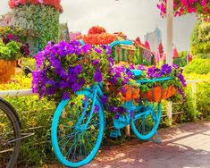 The urban bicycles were first introduced during the Season 5 in 2015 of the Dubai Miracle Garden. Onward; these urban bibycles got replaced with more astonishing floral themes of the garden. Petunia Flower, Geranium Flower, Million Flowers, Miracle Garden, Floral Theme, Large Flowers, Petunias, Go Green, Geraniums