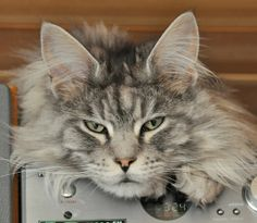 Kitty is not impressed with your visual identification skills.     Photo by Shutterstock