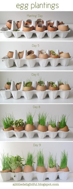 grass eggs for easter - but use white & brown shells and then set out to decorate!