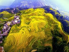 China's autumn landscape: An aerial photo shows the spectacular terraced fields in Longsheng, #Guilin