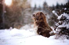 ***winterlight*** by Anne Geier