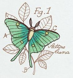 Miniature Menagerie Luna Moth Diagram_image (I remember this night, but I don't think it means the same thing to anyone else, not even you)