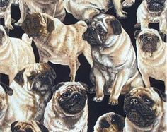 Pug Dog Fabric/Michael Miller/Hot Diggity Dog/Craft Supplies and Tools/Fabric and Notions/Fabric/Pug Gift/Pug Dog Print/Pug Mom/Pug Lover by HotDiggityDogFabrics on Etsy Pet Gifts, Dog Lover Gifts, Dog Lovers, Kitten Surprise, Paper Dolls Clothing, Pugs And Kisses, Fabric Animals, Michael Miller Fabric, Novelty Fabric