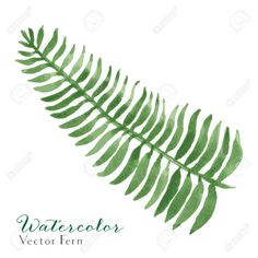 Illustration about Vector Watercolor Fern Illustration. 7 Colors, EPS Illustration of fern, foliage - 91625011 Ferns, Plant Leaves, Watercolor, Drawings, Illustration, Image, Artworks, Google Search, Wedding