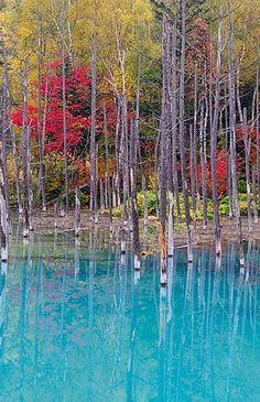 Blue Pond, Biei, Hokkaido, Japan
