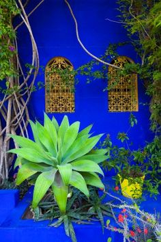 Marrakesh / Maroc !   JARDINS DE MAJORELLE :) Love Cobalt in the garden.  Competes with the sunlight and shines when it's gloomy
