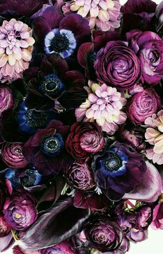 Flowers Photography Peonies Purple Ideas For 2019 Amazing Flowers, Purple Flowers, Beautiful Flowers, Bouquet Flowers, Purple Hues, Paper Flowers, Purple Peonies, Dark Flowers, Gothic Flowers