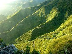 Die Kanareninsel La Gomera ist berühmt für ihren Nationalpark Garajonay mit seinem immergrünen Lorbeerwald.