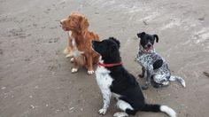 Kwispels Vakantie - hondenopvang in huiselijke kring, kleinschalig en duurzaam: Sinterklaas Wandelfeestje met surprise - Beach Inn...