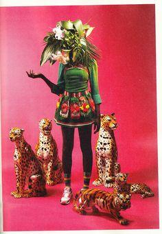 SAVAGE AMERICA  Cheetah