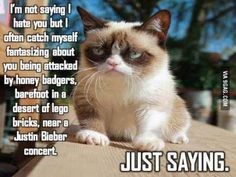 Grumpy cat, grumpy cat meme, grumpy cat quotes, funny grumpy cat quotes, grumpy cat jokes …For the funniest quotes and hilarious pictures visit www. Grumpy Cat Quotes, Cat Jokes, Grumpy Cat Humor, Grumpy Cat Images, Funny Cat Images, Pet Quotes, Funny Animal Memes, Funny Animal Pictures, Funny Animals