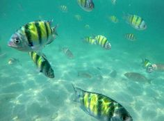 Snorkeling in coral island. Such an amazing experience