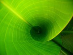 giant bird of paradise | Flickr - Photo Sharing!