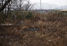Swings in a kindergarten yard are covered in weeds inside the exclusion zone in Okuma, near Tokyo Electric Power Company's (TEPCO) tsunami-crippled Fukushima Daiichi nuclear power plant, Fukushima Prefecture, Japan, on February 13, 2016. Survivors exposed themselves to high levels of radiation five years ago while searching for family members swept away by the tsunami that triggered meltdowns at Japan's Fukushima nuclear plant. The disaster in March 2011 killed nearly 16,000 people along…