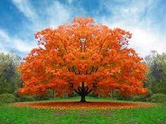 ağaçlar ile ilgili görsel sonucu