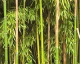 bambous toile tendue - Recherche Google