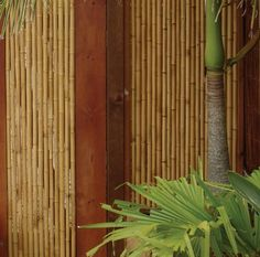 Chippyu0027s Outdoor   Bamboo Screening, Cladding, Fencing And Bamboo Panels