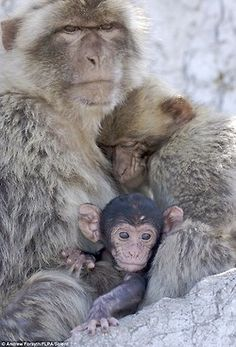 Primate family cuddling. Amazing and sweet.
