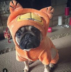 Reposted from @frank_and_stan_rule_the_world TAG A FRIEND by pugsproud