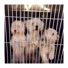 Adult and two pups impounded, puppies reclaimed and adult is left behind