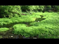 ▶ Gentle Stream 11 hours - Gentle Rivers & Streams, nature sound, relaxing water - YouTube