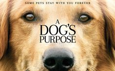 Download wallpapers A Dogs Purpose, 2017, New movie, promo, poster
