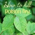 How to kill poison ivy with 3 ingredients - Ask Annad