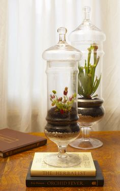 Terrariums with bog plants