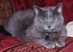 Pets | Asticou from the Aysgarth Station Bed & Breakfast located in Bar Harbor, Maine.
