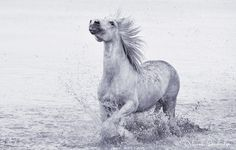 Deborah Sandidge - Google+ Horse of the Camargue