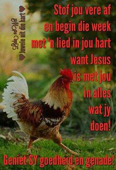 ♡ Lekker Dag, Goeie Nag, Goeie More, Afrikaans Quotes, Day Wishes, Good Morning Quotes, Blessings, Bible, Van