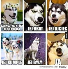 Funny Husky Meme Funny Husky Quote The post Funny ! appeared first on Gag Dad. The post Funny ! appeared first on Gag Dad. Funny Husky Meme, Dog Quotes Funny, Funny Dogs, Funny Memes, Hilarious Jokes, Wtf Funny, Funny Videos, Animal Memes, Funny Animals
