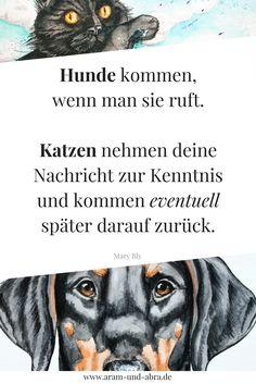 Zitat: Hunde vs Katzen