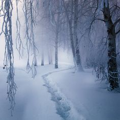Magic forest | trees, winter, snow, pathway