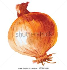 Onion. Hand drawn watercolor painting on white background, vector illustration. - stock vector