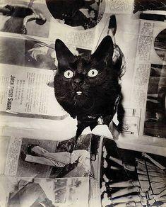 h.w.fechner black cat, 1930 by carbonated, via Flickr