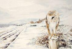 DeviantArt: More Artists Like Sleepy Barn owl study by Reptangle