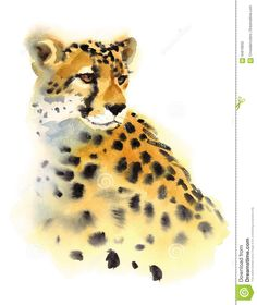Cheetah Watercolor Wild Animal  Illustration Hand Painted - Download From Over 58 Million High Quality Stock Photos, Images, Vectors. Sign up for FREE today. Image: 84818832