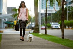 Image result for morning walk dog